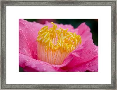 Pretty In Pink Framed Print by Rich Franco