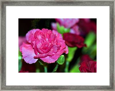 Pretty In Pink Framed Print by Sandi OReilly