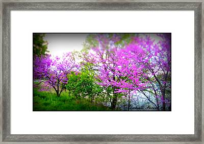 Framed Print featuring the photograph Pretty In Pink Spring Blossoms by Danielle  Parent