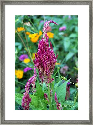 Pretty In Pink Framed Print by Theresa Willingham
