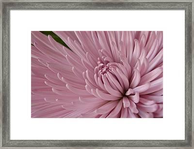 Pretty In Purple 2 Framed Print