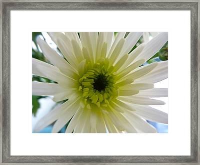 Pretty In White Framed Print by Karen Grist