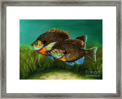 Pretty Little Panfish Framed Print by Kathleen Kelly Thompson