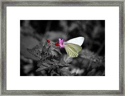 Pretty Margined White Butterfly Framed Print