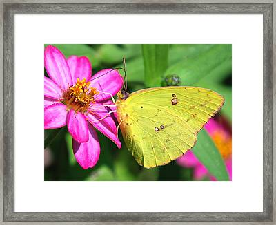 Framed Print featuring the photograph Pretty On Pink by Kathy Gibbons