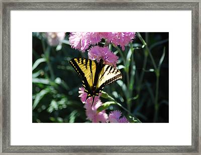 Pretty On Pink Framed Print