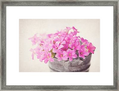 Pretty Pink Framed Print by SKCPhotography