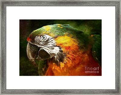 Pretty Polly Framed Print by Lee-Anne Rafferty-Evans
