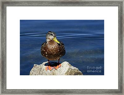 Pretty Poser Framed Print by Sharon Talson