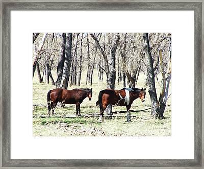 Pretty Sight Framed Print by Clarice  Lakota