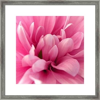 #prettyinpink #flowers #lovely Framed Print