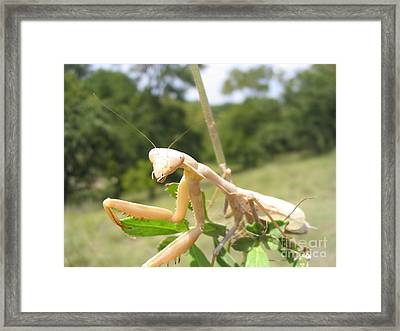 Preying Mantis Framed Print
