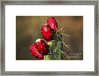 Prickley Pear Fruit Framed Print