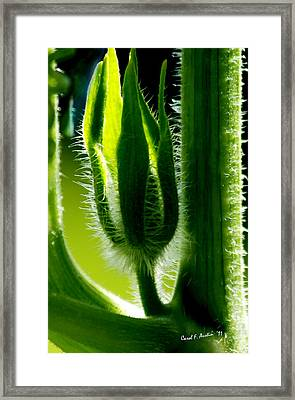 Prickly Affairs Framed Print by Carol F Austin