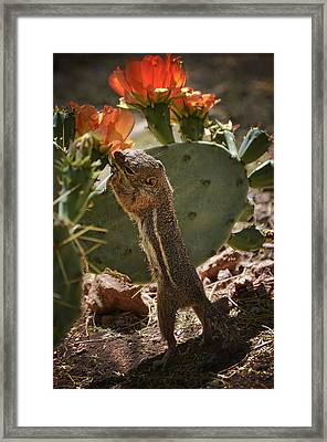 Prickly Lunch  Framed Print