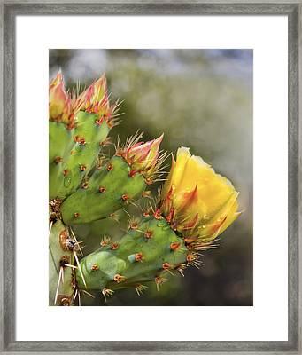 Prickly Pear Flowers Framed Print