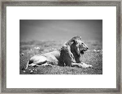 Pride In Black And White Framed Print by Sebastian Musial