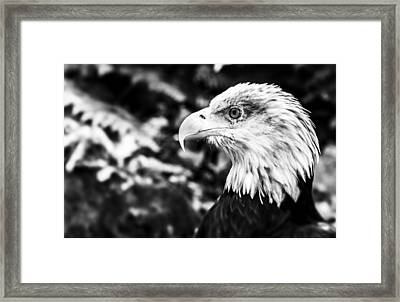 Pride Framed Print