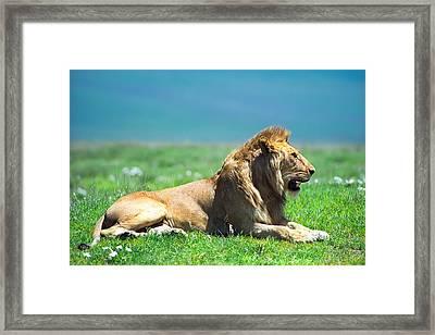 Pride Framed Print by Sebastian Musial