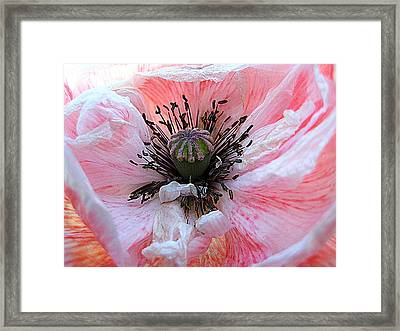 Prime Time Framed Print by Shirley Sirois