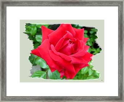 Prince Charles Rose Framed Print by Will Borden