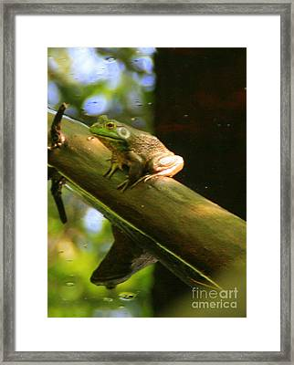 Prince In Frogs Clothing Framed Print