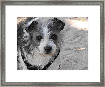Prissy Framed Print by Rebecca Cearley