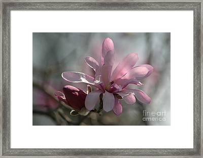 Pristine Pastels Framed Print
