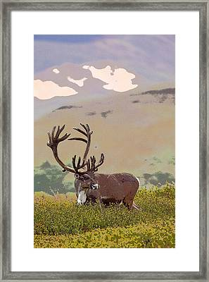 Profile Of A Bull Caribou- Abstract Framed Print by Tim Grams