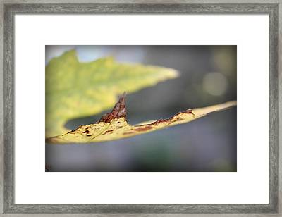 Profile Of A Leaf Framed Print