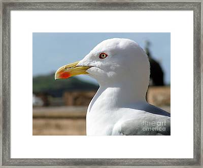 Framed Print featuring the photograph Profile Of A Seagull  by Alexandra Jordankova