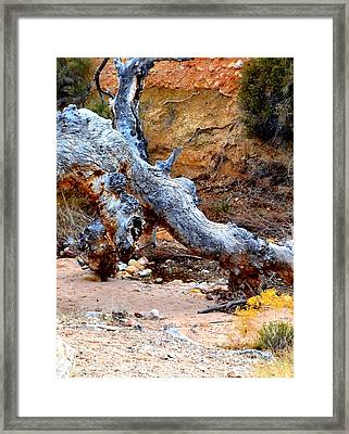 Profile Of The Dragon Framed Print by Diane montana Jansson