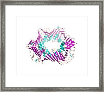 Proliferating Cell Nuclear Antigen Framed Print by Laguna Design