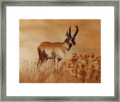 Framed Print featuring the painting Pronghorn Antelope by Cindy Wright