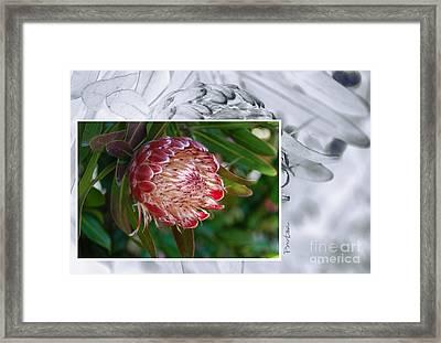Protea 1 Framed Print