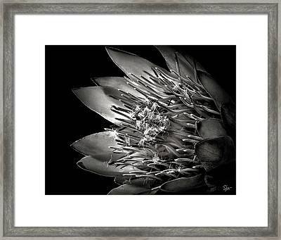 Protea In Black And White Framed Print