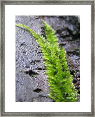 Framed Print featuring the photograph Protection by Tina Marie