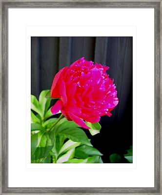 Framed Print featuring the photograph Proud And Radiant by Frank Wickham