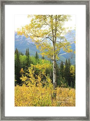 Proud Aspen Framed Print
