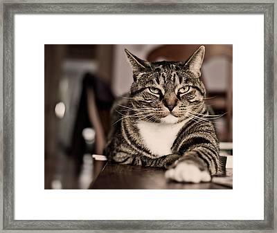 Proud Cat Framed Print by Olga Tremblay