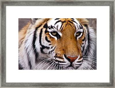 Proud Framed Print by Eric Chapman