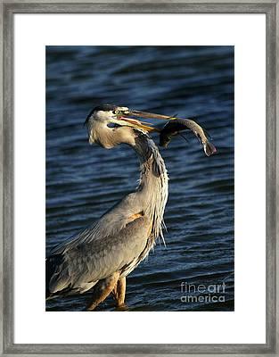 Proud Fisherman Framed Print by Sabrina L Ryan