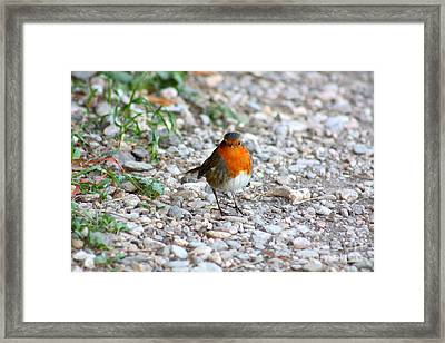 Proud Little Bird Framed Print by Rogerio Mariani