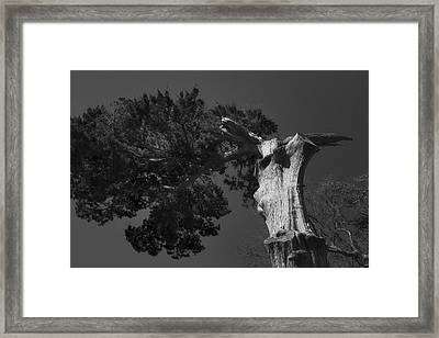 Proud  Framed Print