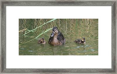 Proud Mom Duck Framed Print by Valia Bradshaw