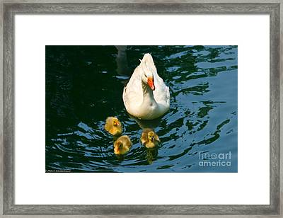 Proud Mother  Framed Print by Mitch Shindelbower
