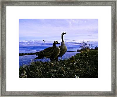 Proud Parents Framed Print by Joshua Dwyer
