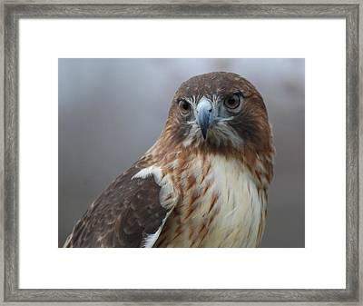 Proud Prince Of The Skies Framed Print by Richard Bryce and Family