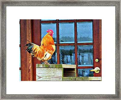 Proud Rooster Framed Print