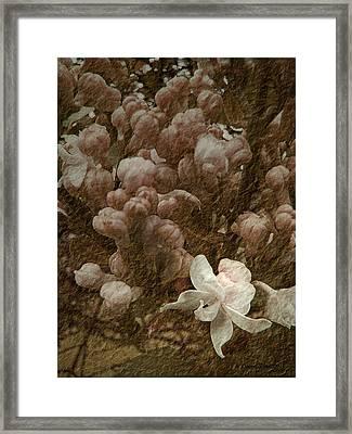 Pruning Lilacs Framed Print by Lianne Schneider